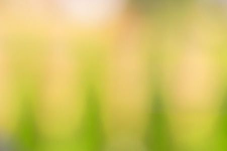 colour in: Abstract blurred background color in selective focus. Foto de archivo