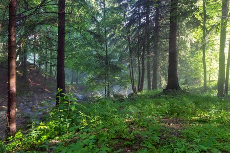 Beautiful green forest in the sunshine. Stok Fotoğraf