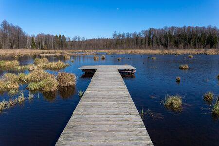 Landscape with lake in summer. Blue sky. Stok Fotoğraf
