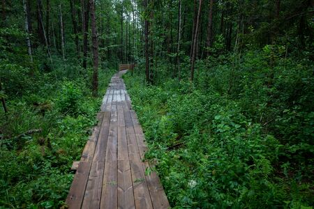 Wooden path in the forest Stok Fotoğraf
