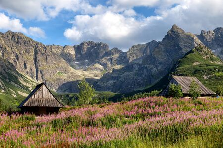 View of the Tatras mountains and colorful flowers in Gasienicowa valley. Poland