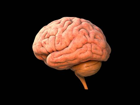 Brain human anatomy 3D - Isolated brain anatomy structure, head organ, lobes, nervous system, neurology object, power of human activity, body part, brainstorming, on black background