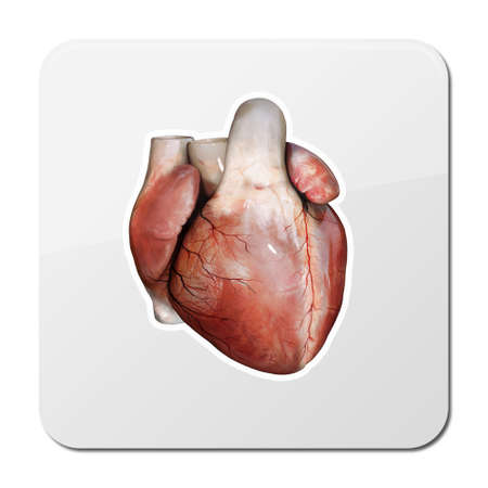 Heart anatomy icon, cardiology concept. medical health care symbol of an inner cardiovascular organ, Realistic human internal organ, 3d and 2d Imagens