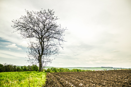Landscape shot made to a dried tree by heat at the end of spring and the beginning of summer Stock Photo
