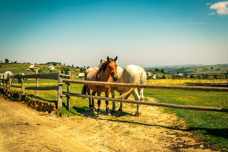 Two horses behind a fence in the countryside