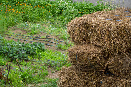 hay stack in a garden with a few hoses