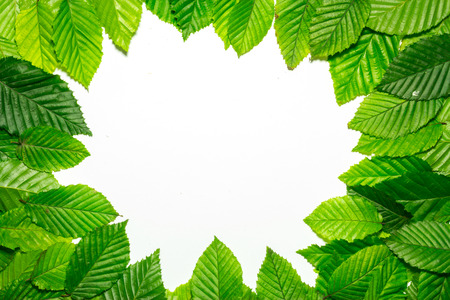 Creative layout made of hophorn ironwood green leaves. Flat lay. Nature background Stock Photo