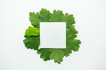 Creative layout made of oak green leaves. Flat lay. Nature background Stock Photo