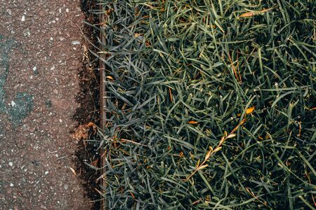 Close-up shot of green grass lawn next to a sidewalk with copy space - Beautiful and clean flora from a park near a walkway – Blade plants used in decoration in gardens Banque d'images - 149580877