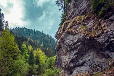 Moss covered rock-face with forest in background