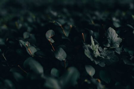 Dark leaf nature background of small plants – Lush and fresh forest or garden vegetation in dark tones