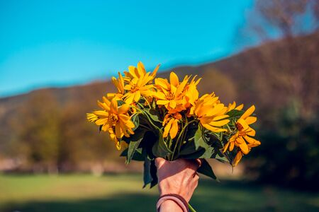 Young person giving yellow flowers to someone in nature on a sunny day - Showing love and appreciation by offering a bouquet of wild blooms - Beautiful affectionate gesture Фото со стока