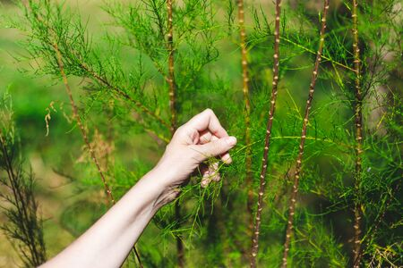 Young woman hand holding leaf in a natural green environment - Female touching lush forest vegetation in sign of love and compassion - Strong bound of humans with nature Archivio Fotografico