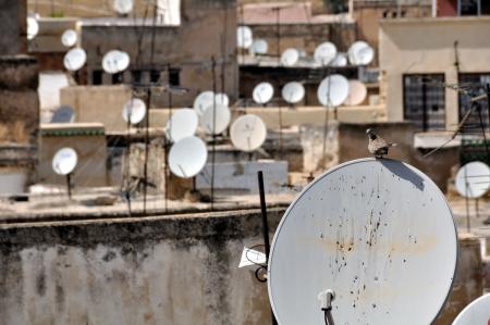 antena parabolica: Una sentada de aves en la antena parabólica con otros platos borrosa en el fondo en la Medina de Fez, Marruecos Editorial