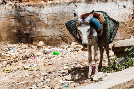 medina: Mule standing between the garbage pile in Fez Medina, Morocco