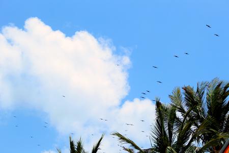 The view of the sky 版權商用圖片