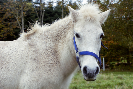 White horse standing outside on grass in autumn.