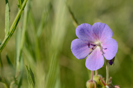 the closeup of blue flower with green background Imagens