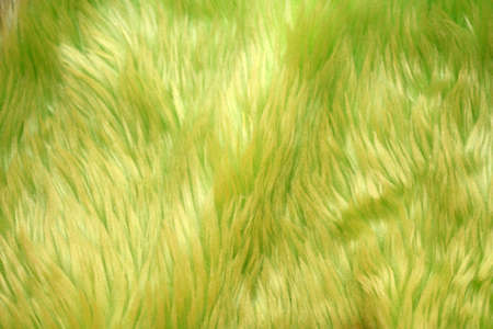 A green fur  as a nice background photo