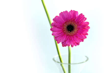 flowers in a vase and a white background photo