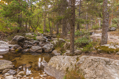 Backwater stream surrounded by pine trees in the Sierra de Guadarrama near the port of Navacerrada. The canyon Spain