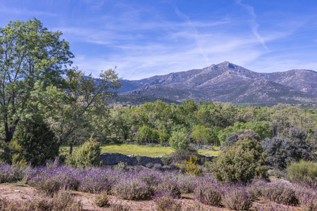 landscape of the sierra de guadarrama with flowery fields and in the background the mountain known as the Malicious. Becerril de la Sierra madrid Spain