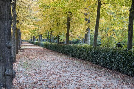 Road with benches and trees with their fall foliage in the royal gardens of Aranjuez. Madrid's community. Spain Foto de archivo
