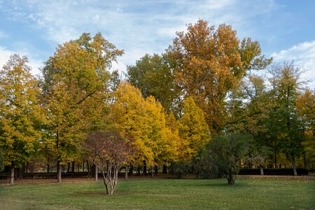 park with different types of trees all with their colorful foliage by autumn. Aranjuez. Madrid's community . Spain