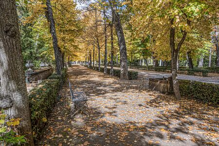 forest road with a bench in the parks of the city of Aranjuez one autumn day. Madrid's community . Spain