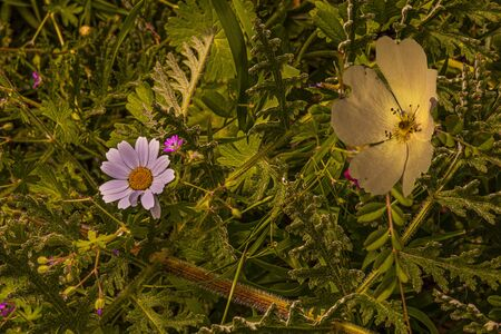 Colorful background of wild flowers and plants in dim light. Фото со стока