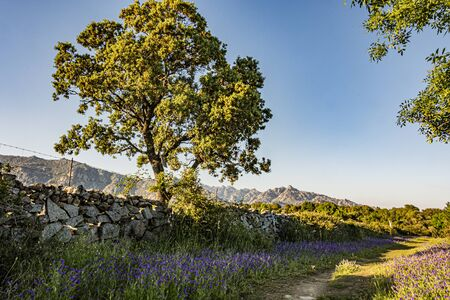 tree next to a rural path in the sierra de guadarrama. Madrid's community. Spain Foto de archivo