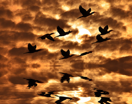 cormorant: Sunrise and dark clouds Shadow of cormorant bird  flying to the sun  Stock Photo