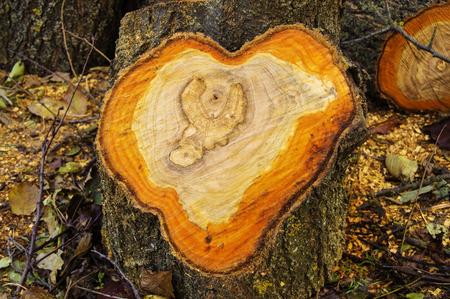 wood cut: saw cut wood heart Stock Photo
