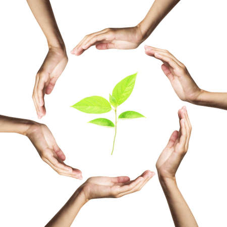 green plant surrounded by hands Stock Photo - 7772079