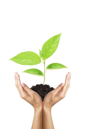 green plant in woman hands isolated on white photo