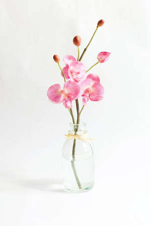 pink orchid in vase photo