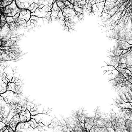 arboles blanco y negro: Ramas del �rbol  Foto de archivo