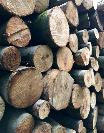 deforested: Stacked tree trunks for timber industry