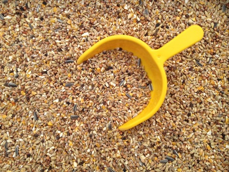 Chicken feed with yellow shovel Stock Photo
