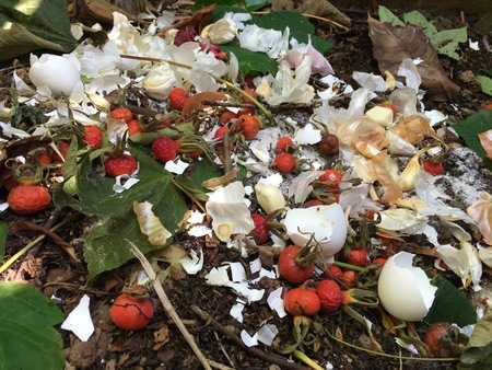 desechos organicos: Fresh organic waste and compost with rose hips in the garden