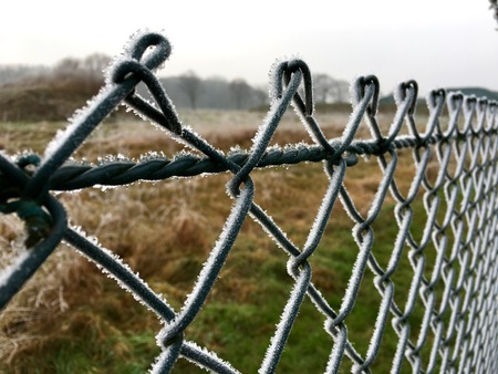 Hoarfrost on a green wire mesh fence in winter