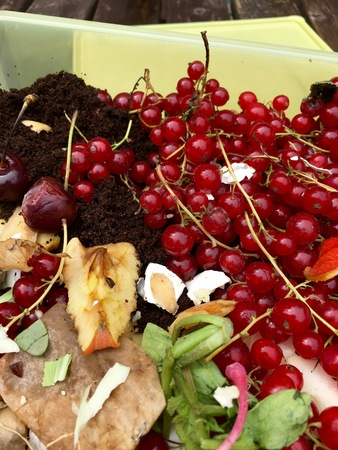 Fresh organic rubbish with currants in a small plastic bucket