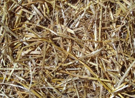 Background of golden brown straw