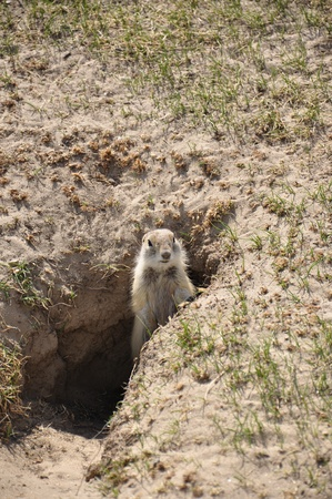 gopher: Gopher in hole