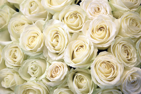 White roses. Floral Texture and background. Flowers closeup. Wedding and wedding accessory. The rose petals. A large bouquet. Foto de archivo