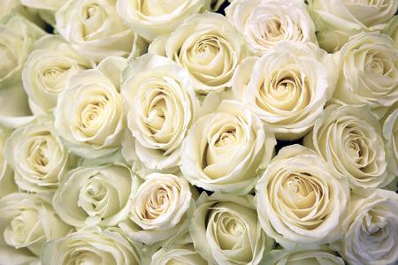 mazzo di fiori: Rose bianche. Struttura floreale e lo sfondo. Fiori del primo piano. Nozze e matrimonio accessorio. I petali di rosa. Un grande mazzo di fiori.