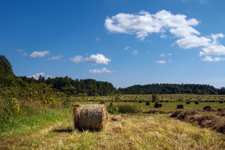 feedstock: Coil haystacks in the field. Autumn harvested field. Rural views of the meadow with an oblique grass and haystacks. Food for cows and horses. Stock Photo