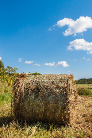 feedstock: Coil haystacks in the field, autumn harvested field, rural views of the meadow with an oblique grass and haystacks. Food for cows and horses. Stock Photo