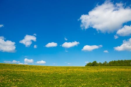 Rural views to the flower meadow and blue sky, undulating terrain. Field with yellow dandelions to the horizon. Pastoral panorama of nature summer. Beautiful landscape of a Sunny day. Stock Photo