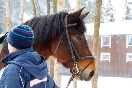 Muzzle of horse in winter with snow falling on her reins to the groom.